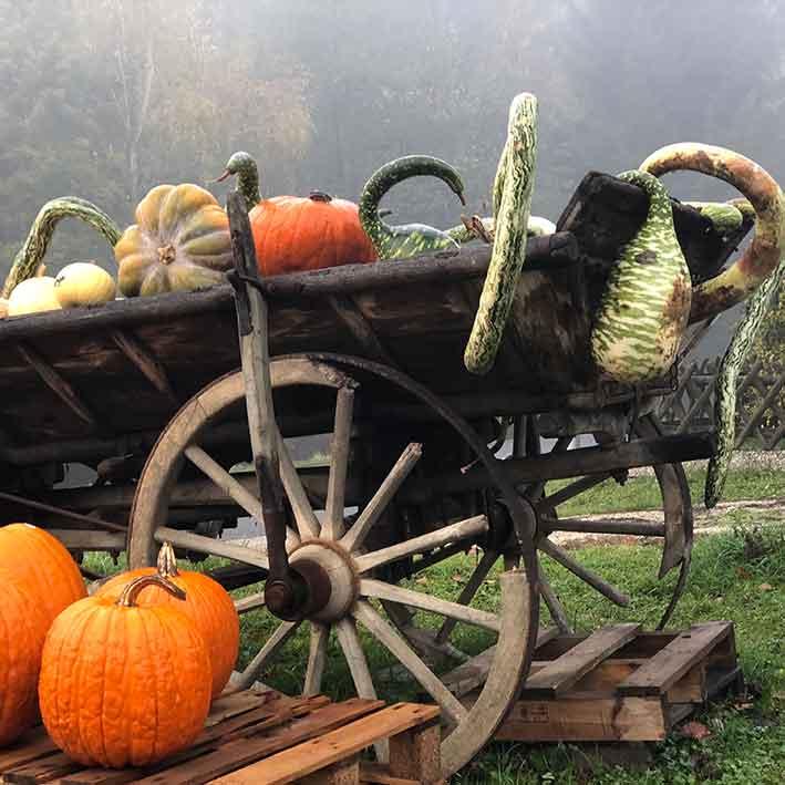 foto zucche lower austria